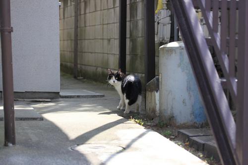 そと猫さん.jpg